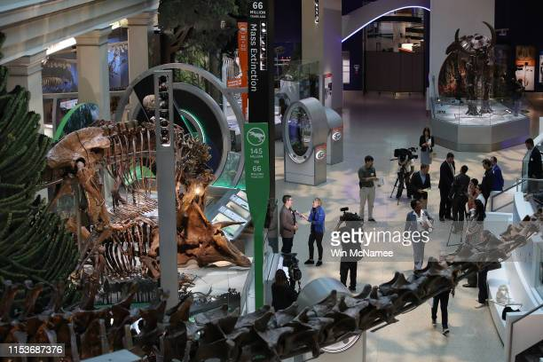 """New exhibits are displayed during a press preview of the Smithsonian's National Museum of Natural History's newly reopened """"David H. Koch Hall of..."""