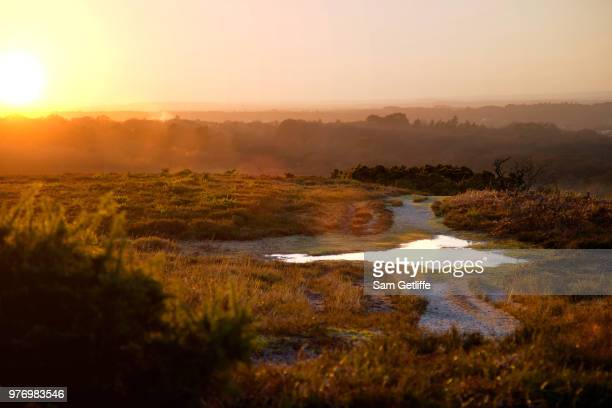 New forest at sunset, New Forest National Park, Hampshire, England, UK