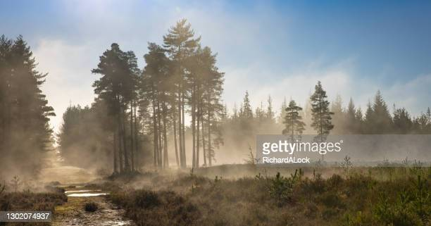 new forest national park - forest in the mist series - heatwave stock pictures, royalty-free photos & images