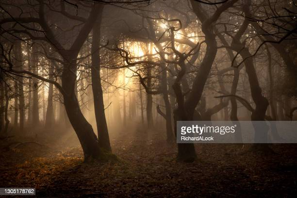 new forest national park - forest in the mist series - national wildlife reserve stock pictures, royalty-free photos & images