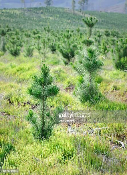 Plantation de New Forest