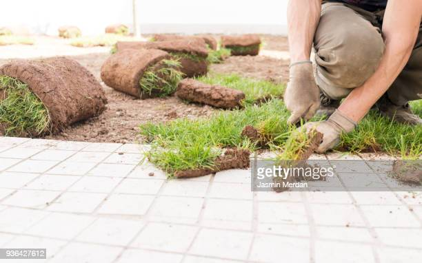 new grass turf - landscaped stock pictures, royalty-free photos & images
