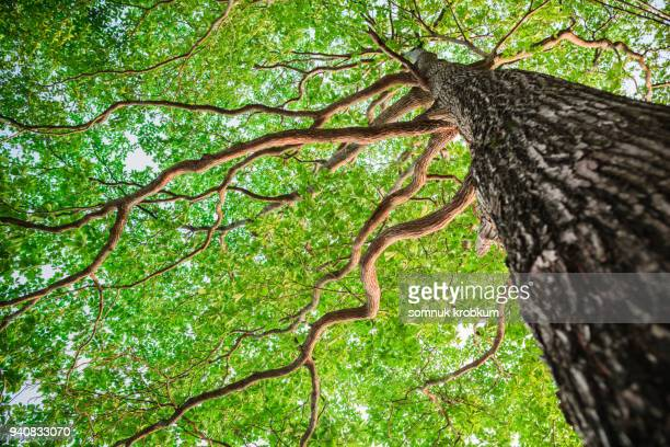 new green leaf tree in nature forest - tree stock pictures, royalty-free photos & images