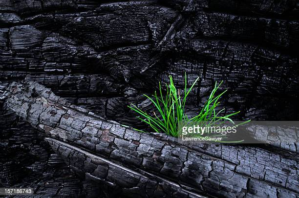 new growth after the fire - forest fire stock pictures, royalty-free photos & images
