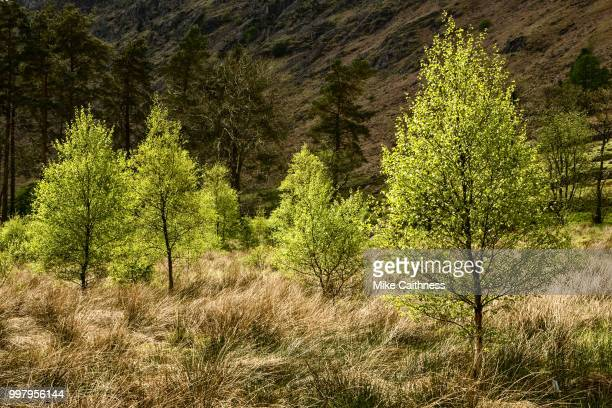 new growth - mike caithness stock pictures, royalty-free photos & images
