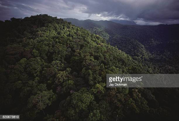 new guinea rainforest - papua new guinea stock pictures, royalty-free photos & images