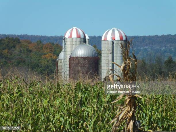 new jersey farm silos - noreen braman stock pictures, royalty-free photos & images
