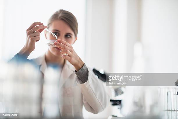 USA, New Jersey, Female lab technician using pipette and petri dish