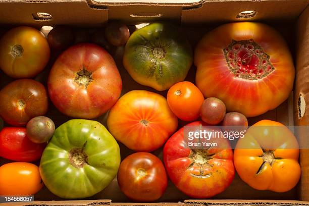 new jersey heirloom tomatoes - edison new jersey stock pictures, royalty-free photos & images