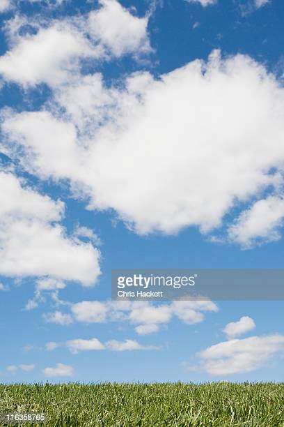 usa, new jersey, idyllic scene with white clouds and green grass - hackett stock photos and pictures