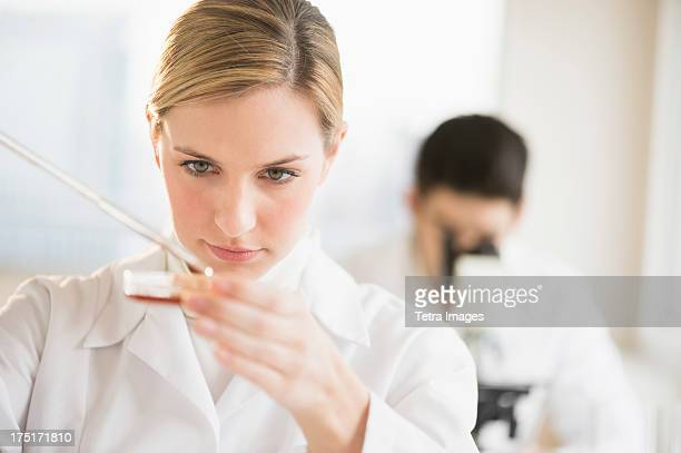 USA, New Jersey, Jersey City, Scientist using pipette and petri dish