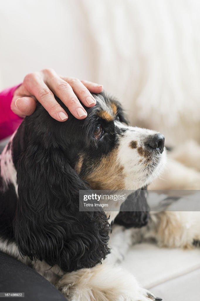 USA, New Jersey, Jersey City, Senior woman stroking her dog : Stock Photo