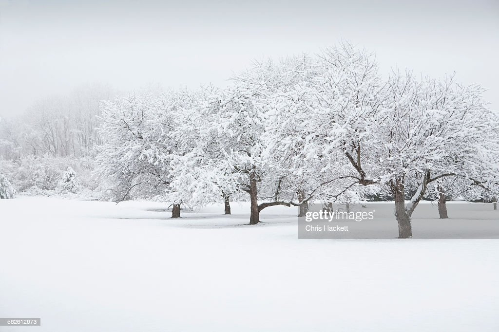 USA, New Jersey, Scenic view of winter landscape : ストックフォト