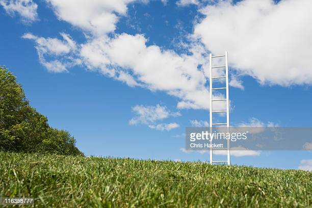 usa, new jersey, white ladder in field - hackett stock photos and pictures