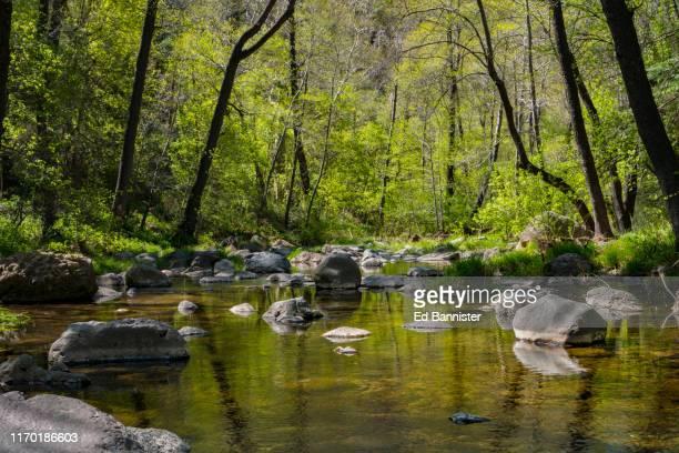 new leaf green spring trees creek rock water reflection - oak creek canyon - fotografias e filmes do acervo