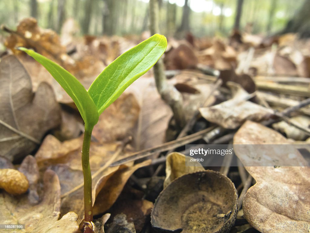 New life in the forest. : Stock Photo