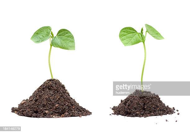 new life isolated on white background (xxxl) - plant stock pictures, royalty-free photos & images