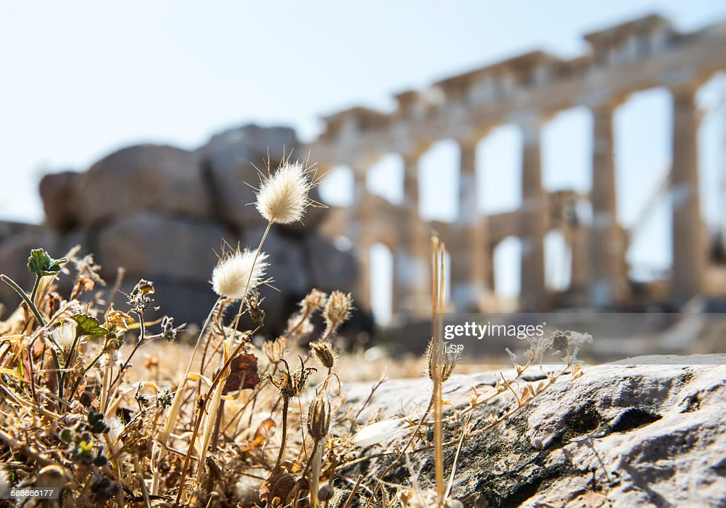 A new life on the ruins : Stock Photo