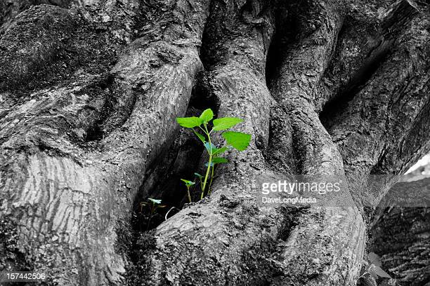 new life - sapling stock photos and pictures