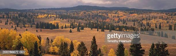 usa, new mexico, carson national forest scenic, autumn - timothy hearsum - fotografias e filmes do acervo