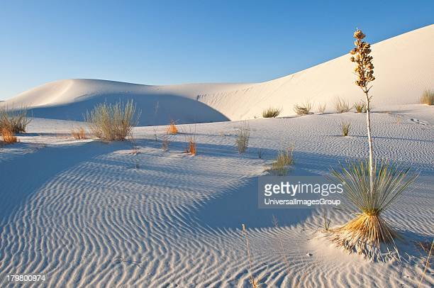 New Mexico Las cruces Heart of the Sands Transverse Dunes and Yucca Plants White Sands National Monument