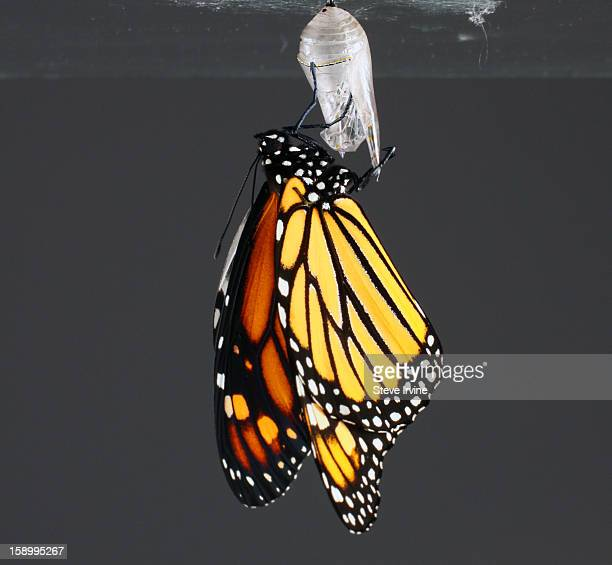 New Monarch