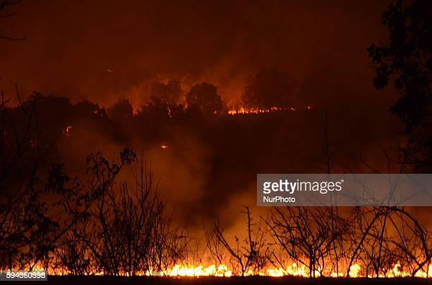 New one forest fire is burnig between the villages of Ostar Kamak Nadezhden and Ivanovo Harmanli Bulgaria which are located some 30 kilometres from...