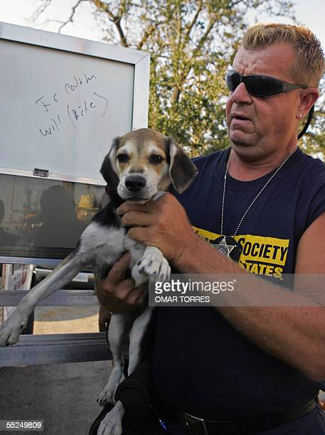 Officer Willie Cirone of the Humane Society of USA carries a dog found in the streets of New Orleans 06 September 2005 According Cirone for each...