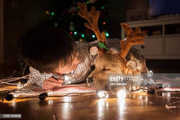 new pet for christmas - christmas dog stock pictures, royalty-free photos & images