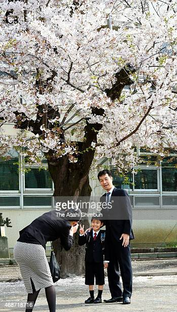 A new pupil poses for photographs with his father under a fullybloomed cherry blossom prior to attend the welcome ceremony at Nakameguro Elementary...