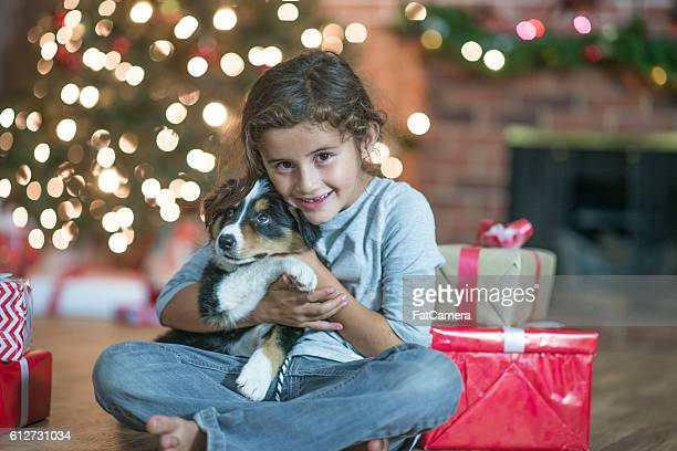new puppy - dog eats out girl stock photos and pictures