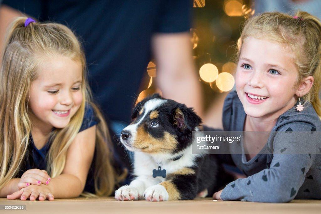 New Puppy : Stock Photo