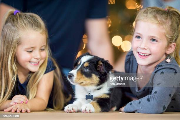 new puppy - dog eats out girl stock pictures, royalty-free photos & images