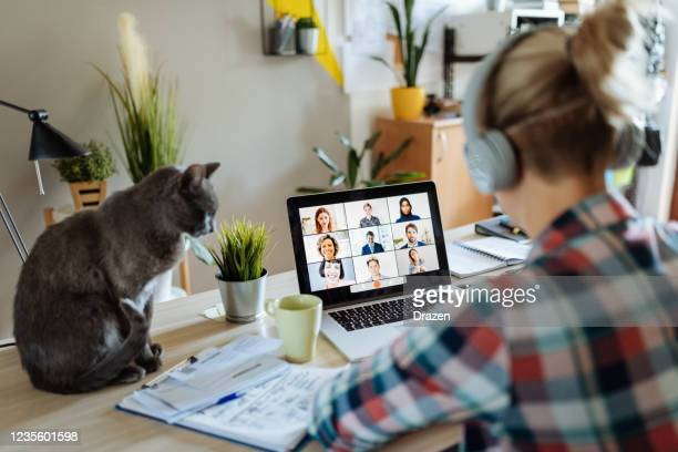 new reality - working from home with pets and kids - cultures stock pictures, royalty-free photos & images