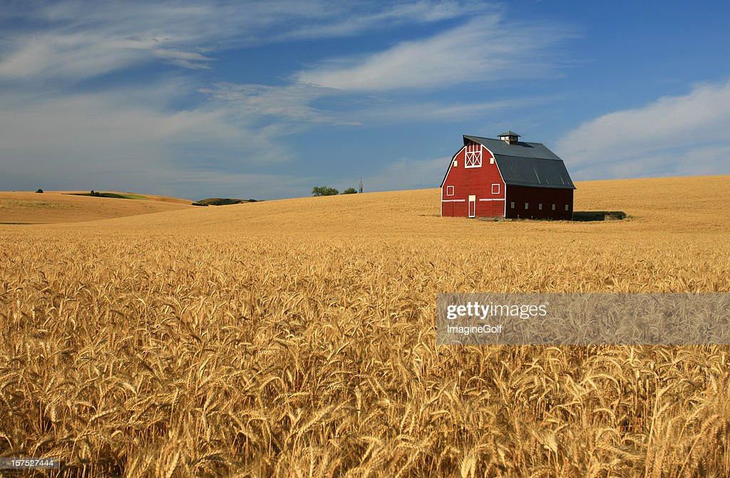 New Red Barn on the Palouse : Stock Photo