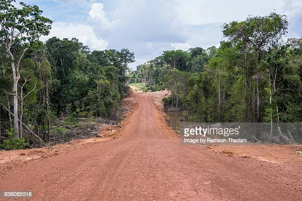 New Road in the Amazon