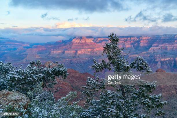 new snow and sunrise at grand canyon - don smith stock-fotos und bilder