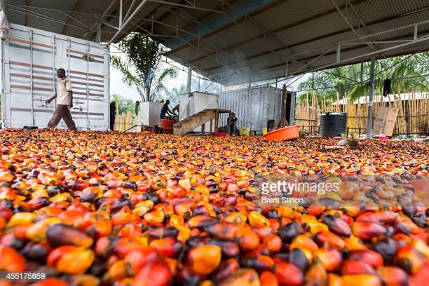 New soap factory that uses palm oil made possible by newly installed electricity lines, on August 8, 2013 in the Congolese town of Mutsora, DRC. The...