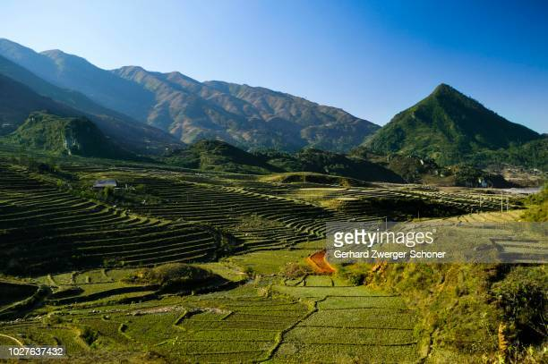 new terrace, rice terraces, rice paddies in sapa or sa pa, lao cai province, northern vietnam, vietnam, southeast asia - sa pa stock photos and pictures
