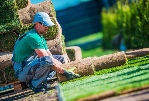 New Turf Grass Installation 954030664