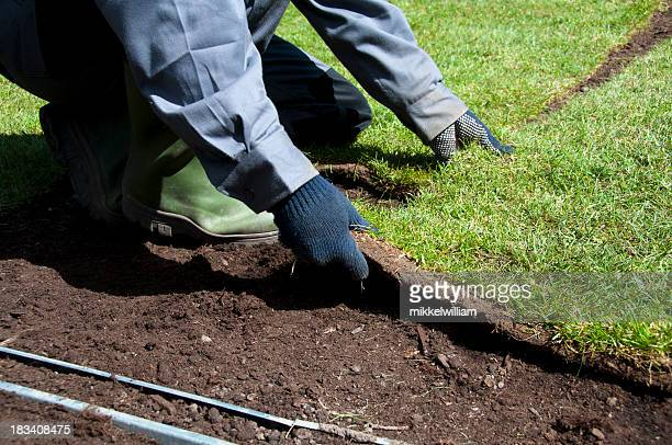 new turf is being placed in the garden in spring - turf stock pictures, royalty-free photos & images