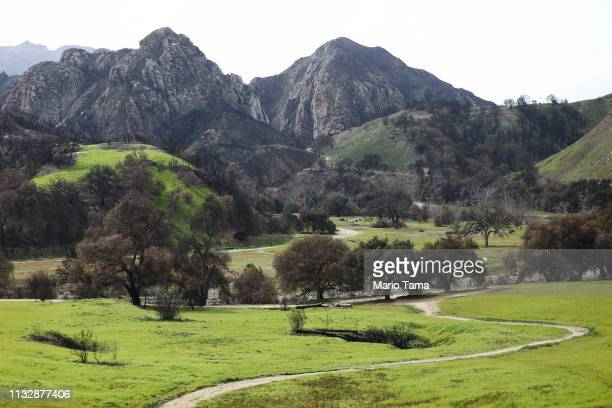 New vegetation sprouts in a Woolsey Fire burn area at Malibu Creek State Park, in the Santa Monica Mountains, on February 26, 2019 near Malibu,...