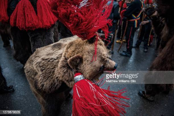 new year bear dancing festival, comanesti, moldova, romania - animal skin rug stock pictures, royalty-free photos & images