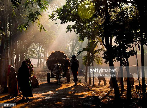 new years first sun light in the village way - bangladesh village stock photos and pictures