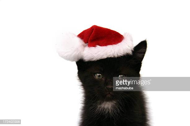 new year's kitten - christmas kittens stock pictures, royalty-free photos & images