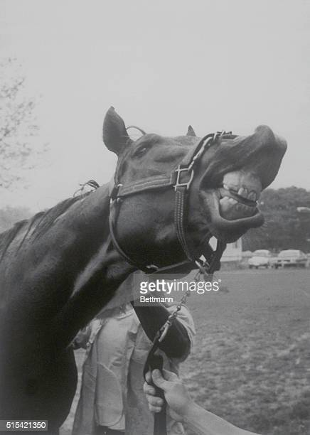 Alydar looks as if he intends to have the last laugh as he's readied May 30 for the June 10 Belmont Stakes After finishing second to Affirmed in both...