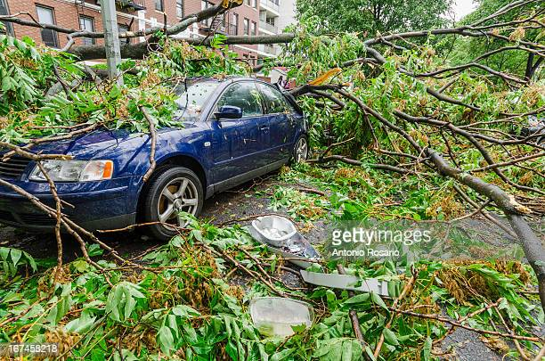 usa, new york, brooklyn, car smashed by fallen tree - hurricane storm stock pictures, royalty-free photos & images