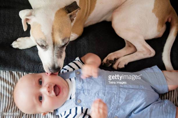 New York, Brooklyn, Dog licking babys face (6-11 months)