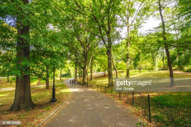 new york central park  footpath trees day manhattan