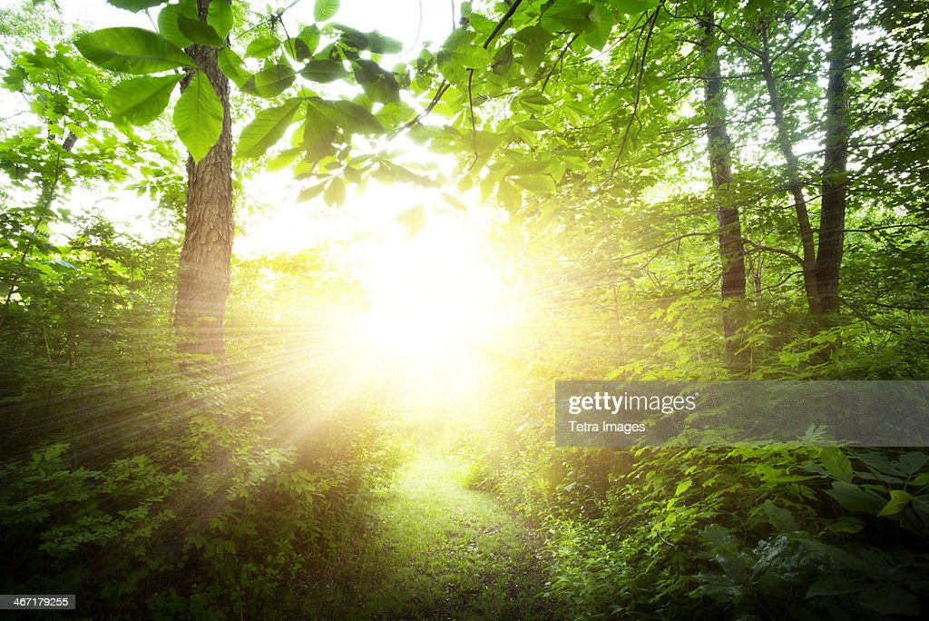 USA, New York City, Green forest at sunrise : Stock Photo